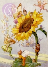 Postkarte Sunflower with Fairies