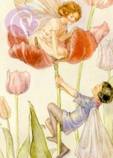 Postkarte Tulip Fairies